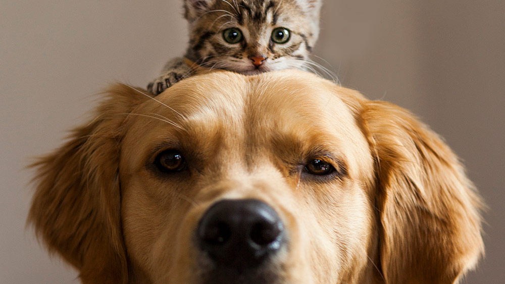 Image of a cat sitting on a dogs head